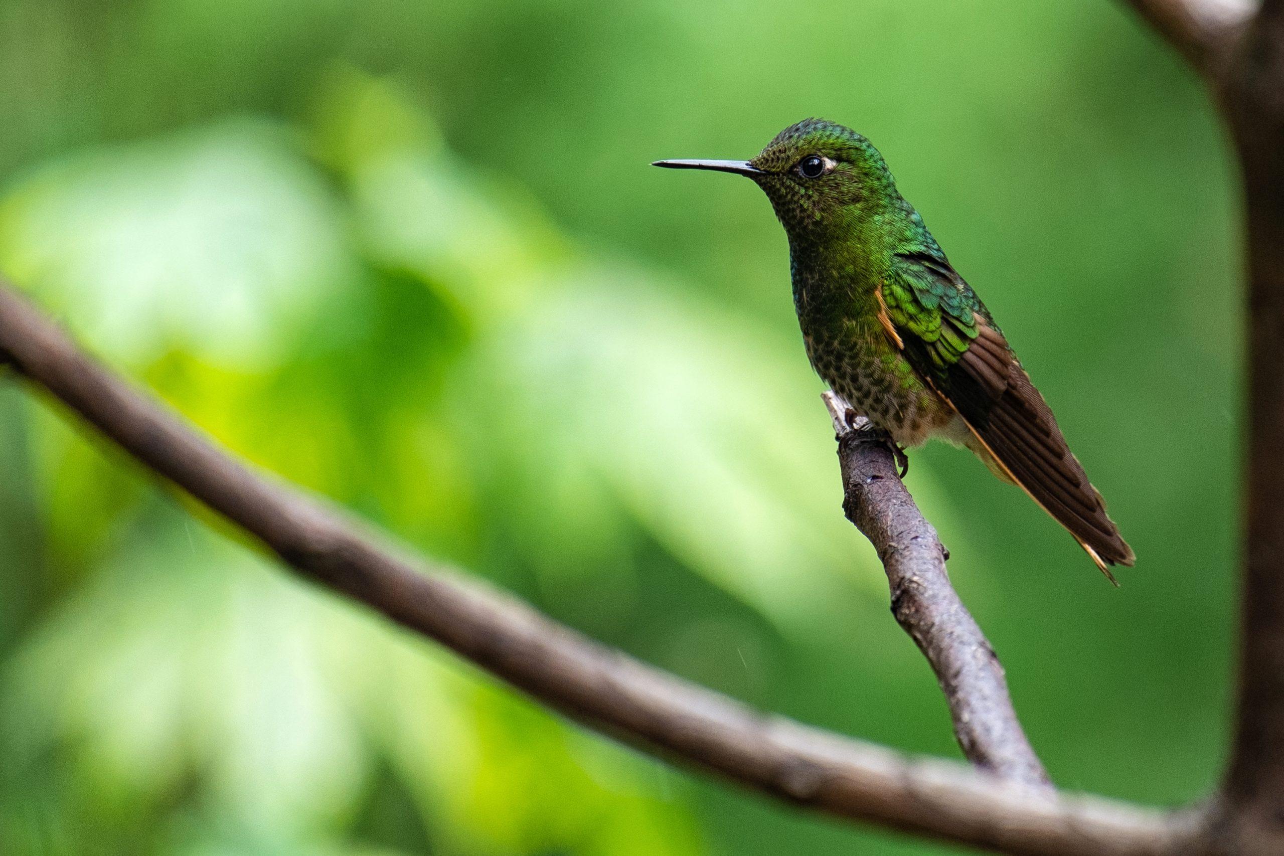 Casa de los colibrís